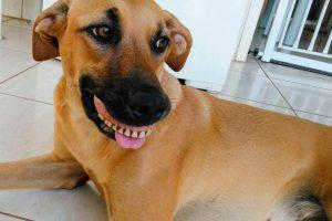 Dog Wearing False Teeth Looks Funny